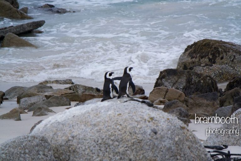 pinguins-1024x683